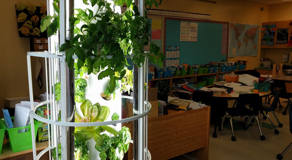 garden tower in classroom with herbs and vegetables lushly growing