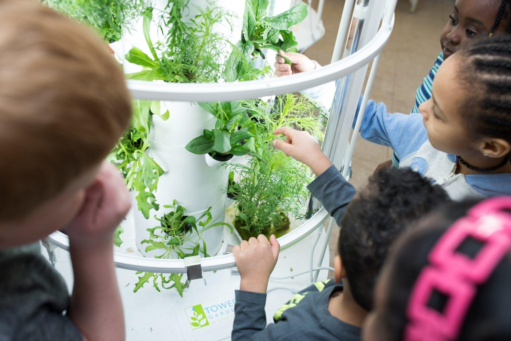 classroom gardens, garden tower, ottawa network for education, onfe